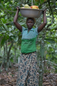 Through training, farmers improve the output of their farms and therefore increase their incomes.