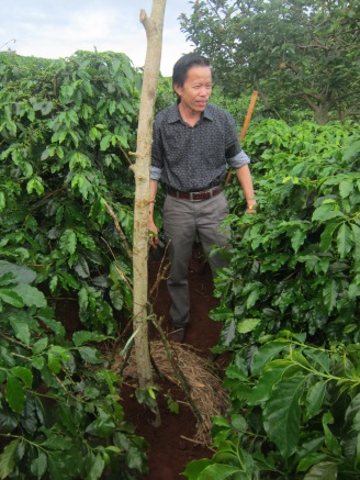 Planting other crops alongside coffee can also supplement farmer incomes. Here, a shade tree is planted to protect the coffee. Small chili pepper plants have also been placed at the roots, and they will climb up the shade tree – within a year, the chili peppers will be ready to harvest and sell.