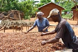 Cocoa_Ghana_dryingbeans8
