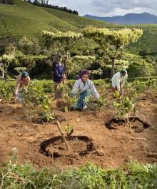 Tea_India_Compost_001
