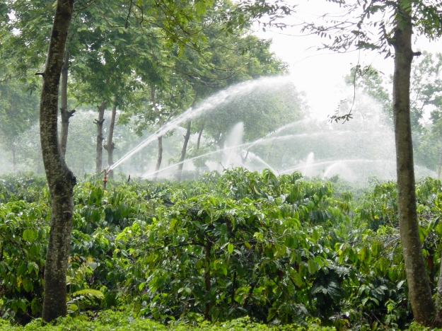 Irrigation_coffee_plantation_Vietnam_UTZ